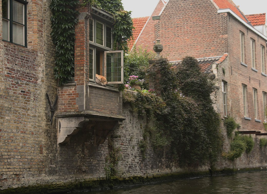 """If you're lucky on your canal tour, you may even spot the """"Dog of Bruges,"""" who spends his entire days looking out the window."""