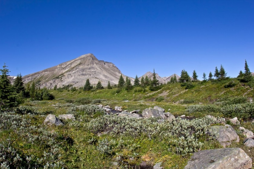 If all hiking could be through gorgeous alpine meadow, I'd be in heaven.